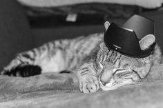 My daughter's cat Maci