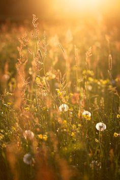| Warm Me Like Sunlight |