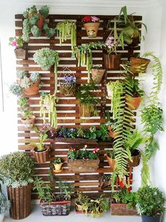 växt vägg