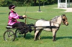 MW-315-Miniature Horse Rolled Leather Show Harness-www.ozarkcanada.com