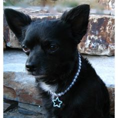 Pet's Faux Pearl and Star Necklace by Isabella Cane