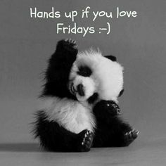 Hands up if you like fridays :-) and pandas
