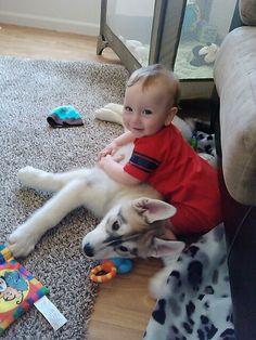 Every husky needs a baby
