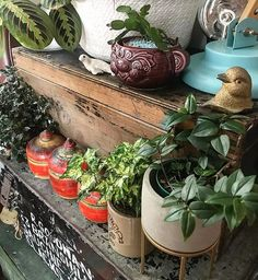 Scaramanga Original Lifestyle (@scaramangauk) • Instagram photos and videos Recycling, Reuse Recycle, Indoor Plant Pots, Potted Plants, Easter Cactus, Charity Shop, Scandinavian Style, Houseplants, Repurposed
