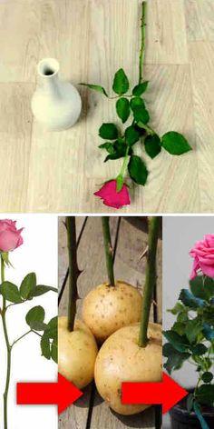 Corner Garden, Tiny Garden Ideas, Big Garden, Diy Garden Projects, Lawn And Garden, Indoor Garden, Farm Gardens, Vegetable Garden, Garden Plants