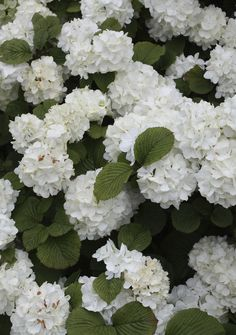 1000 images about flowers plants shrubs trees on for Less maintenance plants