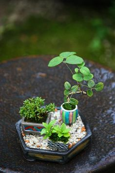 Plant tiny greens through beads (not pictured)