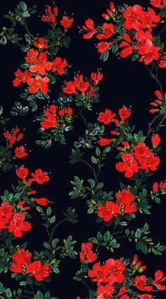 iphone wallpaper floral Brilliant - Flowers Wallpapers For Iphone 4 Chris - # Floral Wallpaper Phone, Wallpaper For Iphone 4, Flower Background Wallpaper, Trendy Wallpaper, Flower Backgrounds, Cute Wallpapers, Wallpaper Backgrounds, Desktop Wallpapers, Neon Wallpaper