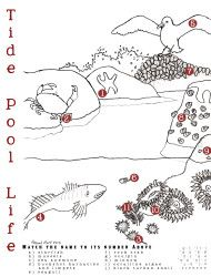 Tide pool coloring page with animal number matching. Perfect activity on the way to the beach!