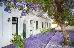 Photo about Flowering jacaranda tree in the town of Graaff-Reinet, South Africa. Image of blossom, graaffreinet, plant - 36389488 Cape Dutch, Dutch House, Shabby, Vacation Rental Sites, The Great Outdoors, South Africa, Architecture Design, Condo, Cottage