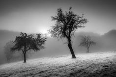 Black trees by freMDart on DeviantArt