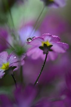 Nice to meet you. Amazing Flowers, Purple Flowers, Beautiful Flowers, Beautiful Pictures, Flora Und Fauna, Fotografia Macro, Bokeh Photography, Happy Paintings, Water Droplets