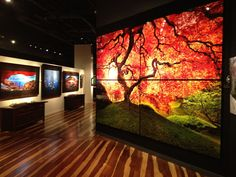 Peter Lik Gallery - Coming here with you was so romantic and fun and is one of my favorite memories of us.