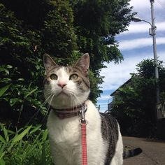 How To Walk Your Cat On A Leash, And Why You Should | HuffPost