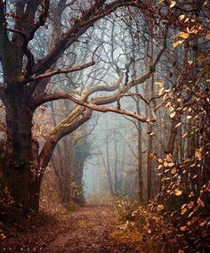"""mycrumplednotebook:  """"•walk with me•  will you walk with me  this forest path  may i lean in close  against your side  use each perfect  heartbeat of yours  to guide the rhythm  of my every step  could you keep me close  and pull me in  so the scent of pine  or a..."""
