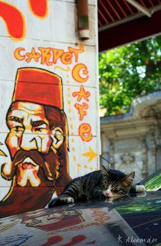 Cap Nap in Istanbul