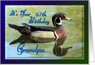 67th Birthday ~ Grandpa ~ Wood Duck Card by Greeting Card Universe. $3.00. 5 x 7 inch premium quality folded paper greeting card. Birthday cards & photo Birthday cards from Greeting Card Universe will bring a smile to your loved ones' face. Whether for one person or the whole family, a paper card will make their birthday memorable this year. Send a paper birthday card from Greeting Card Universe this year. This paper card includes the following themes: Madelin...
