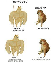 매일유머   밴드 Scooby Doo, Jokes, Humor, Funny, Movie Posters, Animals, Fictional Characters, Animales, Husky Jokes