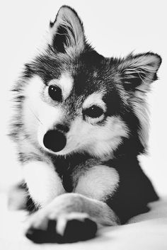 can i take him home?
