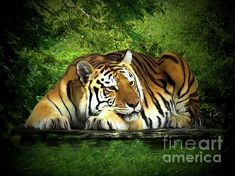 Abstract Animals, Fine Art America, Digital Art, Rest, Art Prints, Artwork, Posters, Art Impressions, Work Of Art
