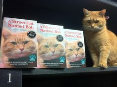 Sweet Pandemonium: The Power of Pets: A Street Cat named Bob and other stories