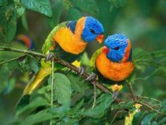 http://www.mascotas.org/wp-content/uploads/Curiosidades-de-Animales1.jpg