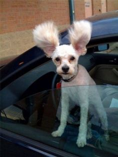 I Has Bunny Ears