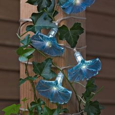 Solar Morning Glory Lights to drape over a mirror or headboard.  Would have to put the solar unit in the window some way..hmmmm