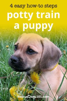 Learn how to house train any puppy fast with my 4 easy to follow steps. #puppy #puppies #dogs #rescuedogs101 Dog Rescue Shelters, Rescue Puppies, Puppy Potty Training Tips, Training Your Dog, Animal Rescue Stories, Dog Pee, Dogs 101, Helpful Tips, Easy