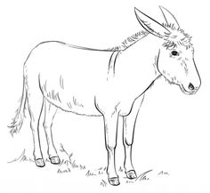 Donkey coloring page from Donkeys category. Select from 24104 printable crafts of cartoons, nature, animals, Bible and many more.