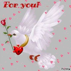 Evening Greetings, Good Morning Greetings, Happy Valentines Day Wishes, Good Morning Images Download, Good Day Quotes, Gifs, Good Night Wishes, Spiritual Messages, Good Night Image