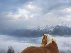 Beautiful Horses Wallpaper | White horse swimming in the blue sea desktop wallpaper