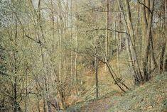 Frühling, 2011, Eitempera auf ungrundierter Baumwolle, 325 x 480 cm, Besitz von Franz Gertsch & Maria Gertsch-Meer, © 2011 Franz Gertsch