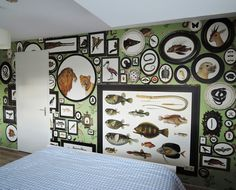 ZOO: behang 'dierenkabinet' in woonhuis / wallpaper 'cabinet of animals' in apartment