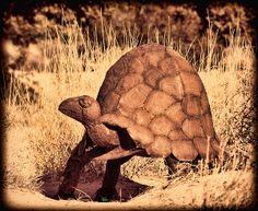 Prehistoric Turtle - photograph by Douglas MooreZart #photography #fineart #desertphotography #anzaborrego #sculpture #turtle #douglasmoorezart