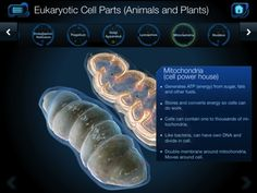 Cell and Cell Structure is a middle school intro to cellular biology, with detailed imagery, videos, and quizzes.