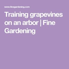 Training grapevines on an arbor | Fine Gardening