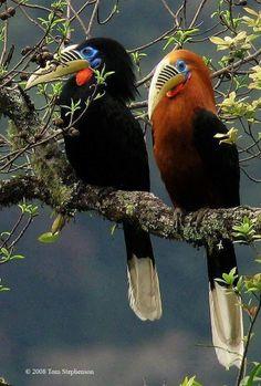 Exotic birds by Tom Stephenson. Kinds Of Birds, All Birds, Birds Of Prey, Love Birds, Pretty Birds, Beautiful Birds, Animals Beautiful, Exotic Birds, Colorful Birds