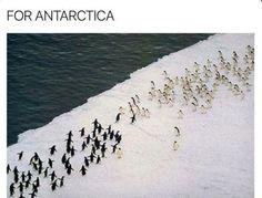 For Antarctica!