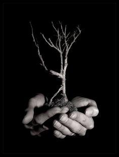 """GROEI          / (david preissel   life's like a tree.) Jou eigen persoonlijke ontwikkeling en groei ligt en jou handen en niet in een ander zijn handen. Vandaar """"het boompje kan groeien uit jou handen"""" vooral op het creatieve gedeelte."""