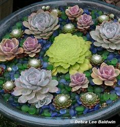 Succulents. This is so artistic. It looks like a pond of lotuses and water lilies, accented by tea lights at night.