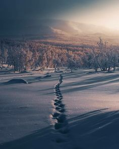 Lapland, Finland Of The Day Winter Photography, Landscape Photography, Beauty Photography, Lapland Finland, Snow Covered Trees, Winter Wonder, Time Of The Year, Winter Scenes, Beautiful Landscapes