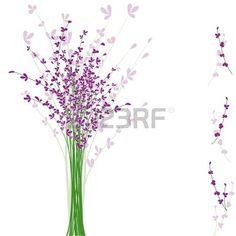fiori di lavanda viola estate su sfondo bianco Archivio Fotografico
