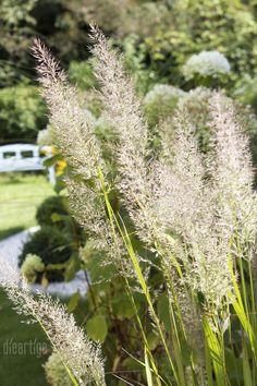 Gräserreigen - dieartige // DESIGN STUDIO // Raumplanung Interior Garden, Interior Design Studio, Bungalow, Garden Design, Plants, Studio Interior, Garden Design Ideas, Lawn, Bowties
