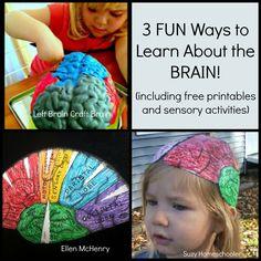 Brain Activities