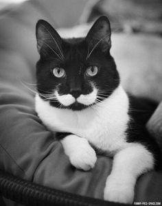 Perfect mustache kitty ... makes me smile :)