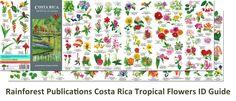 Costa Rica Rainforest Flowers Guide