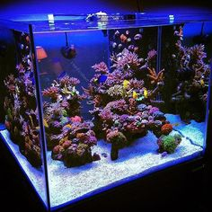 Saltwater Aquarium Fish - Find incredible deals on Saltwater Aquarium Fish and Saltwater Aquarium Fish accessories. Let us show you how to save money on Saltwater Aquarium Fish NOW! Saltwater Aquarium Setup, Coral Reef Aquarium, Saltwater Fish Tanks, Nano Aquarium, Aquarium Design, Marine Aquarium, Aquarium Fish Tank, Fish Aquariums, Aquarium Ideas