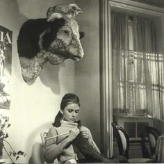 Audrey Hepburn - I love the cat watching her knit on top of the trophy head.