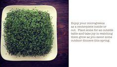 microgreens-blogpost